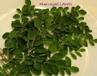 Dry Drumstick Leaves
