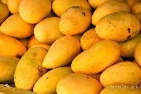 Mango (sappota)