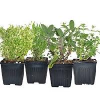 Live Home Grown Herbal Plants