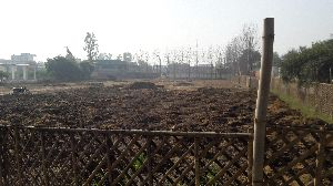 Utsav Vermicompost Fertilizer