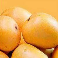 Fresh Ratnagiri Alphonso Mango