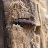 Wood Borer Pest Control Services