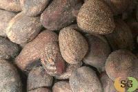 Shea Nut Seed