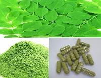 Moringa Oleifera Leaves And Powder