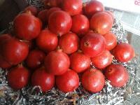 Pomegranate(ANAR Bhagwa)
