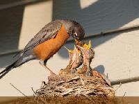 Bird Feeds