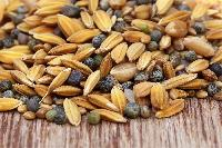 Bird Seeds  Or Oil Seeds