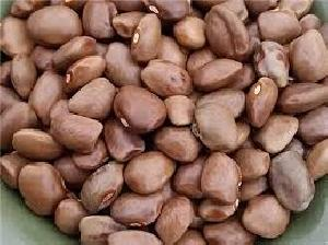 Green Lentil Bean Seeds For Planting