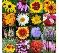 Seasonal Flower