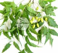 Neem Leaves & Oil