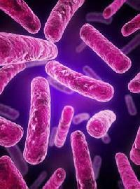 Human Probiotic Blend