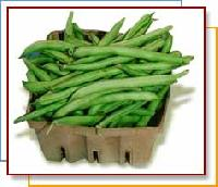 Green Beans (Phaseolus vulgaris)