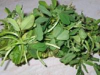 Methi (fenugreek Leaves)