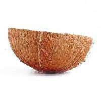 Coconut Shell
