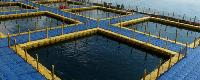 Offshore Fishing Farming