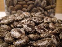 Castor Bean Seed