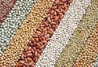 Soya Seeds
