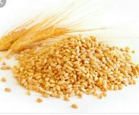 Chakki wheat