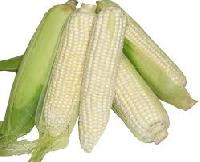 Whole White Corn
