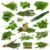 Medical And Herbal Plant
