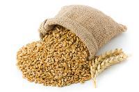 Organic Cereal Grain