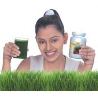 Organic Wheatgrass Powder