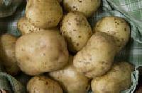 Processing Potato