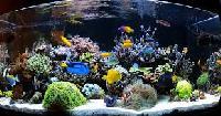 Marine Saltwater Aquarium Tank