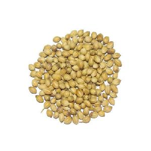 Single Parrot Coriander Seeds