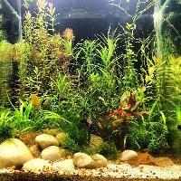 Planted Aquarium Tank