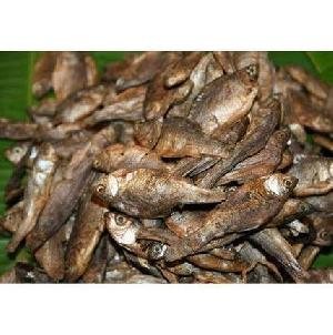 Rohu Katla Fish Seeds