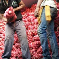 Red Onion Export Paking