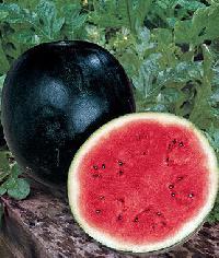 Black Ice-box Watermelon Seed