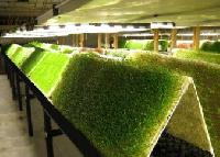 aeroponic construction services