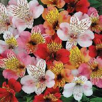 Exotic Fresh Flowers