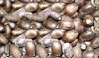 Karanja Seeds