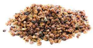 Bakul Dry Extract