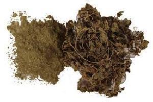 Brahmi Dry Extract
