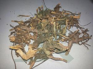 Chitrakmool Dry Extract