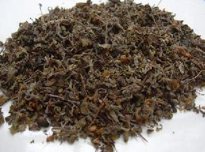 Nirgundi Dry Extract