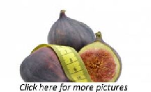 Fig (ficus Carica) Plants