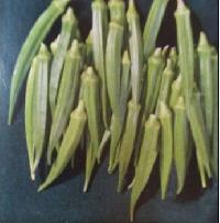 Lady Finger Seeds