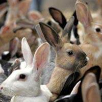 Rabbit Farming Services