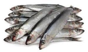Fresh Anchovy Fish
