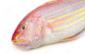 Fresh Threadfin Bream Fish