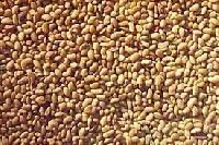 Rijka Seeds