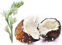 Ibnsina Rajanigondha Coconut Hair Oil