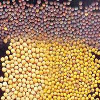 Mustard Seeds - 01