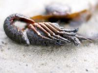 Shrimp Larval Feeds
