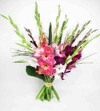 Gladiolus Fresh Flower